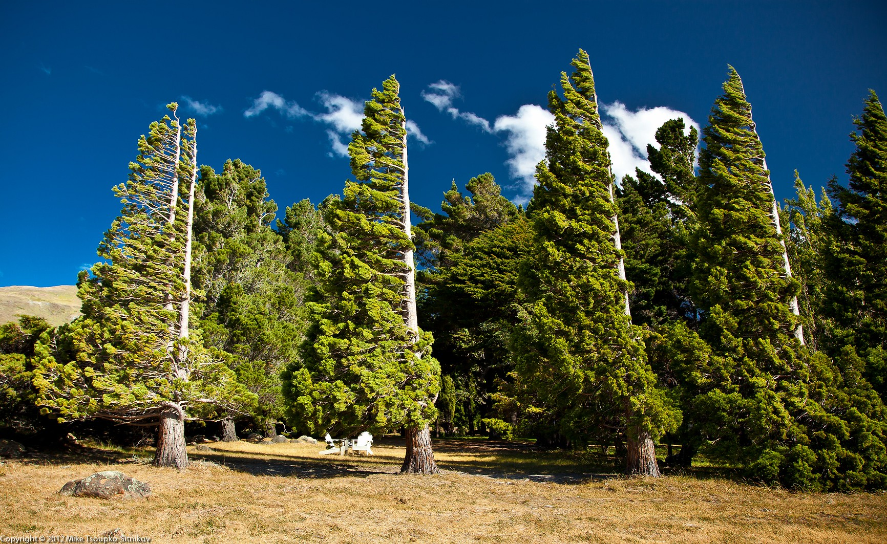 Wind-shaped trees around the lodge