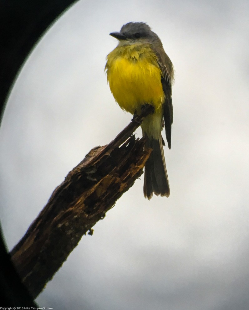 A bird shot with smartphone camera via a spyglass