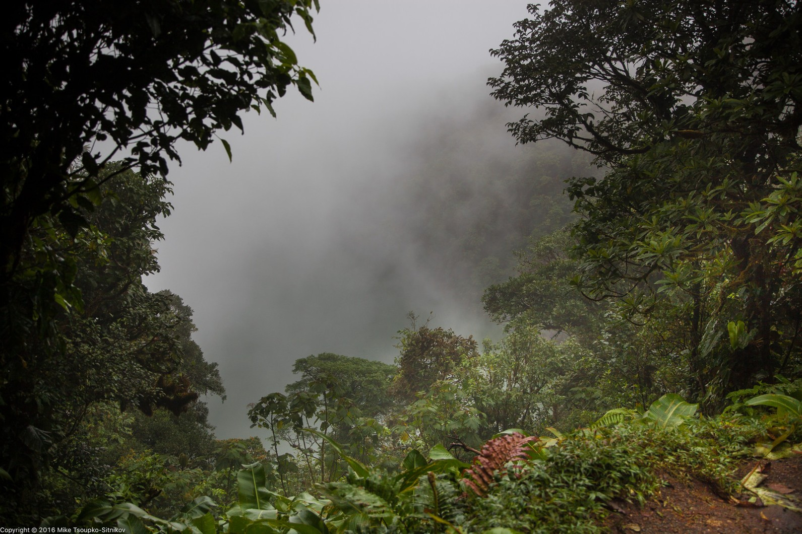 Looking into the Cerro Chato crater