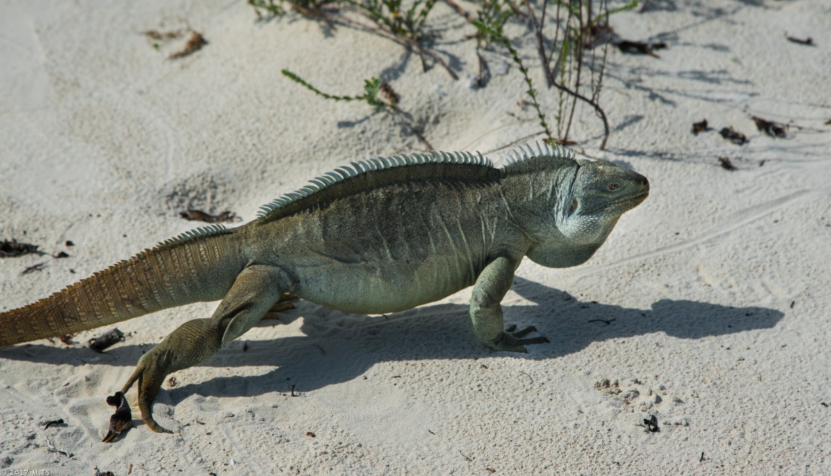 Little Water Cay (Iguana Island), Turks and Caicos